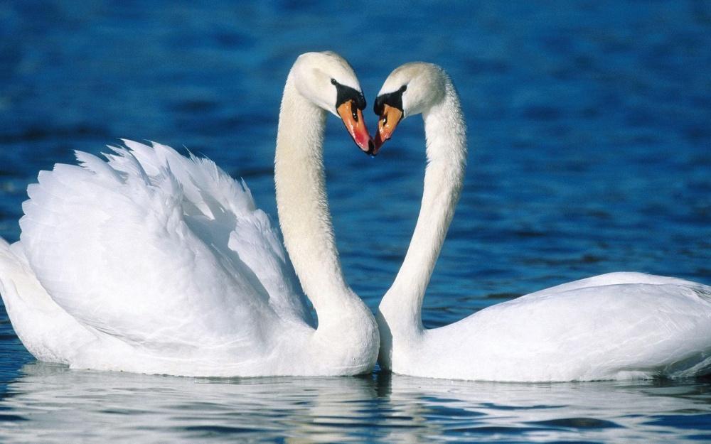 В любви Козерог ценит верность и преданность