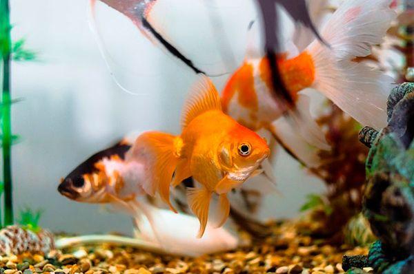 Если рыбки из сна разноцветные, это говорит о хаосе в голове