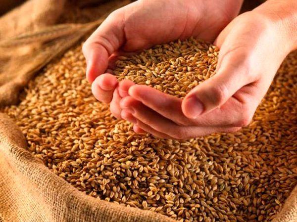 Горсть пшеницы для обряда