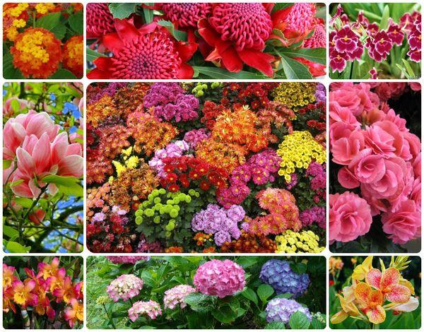 У каждого зодиакального знака есть свой цветок-талисман