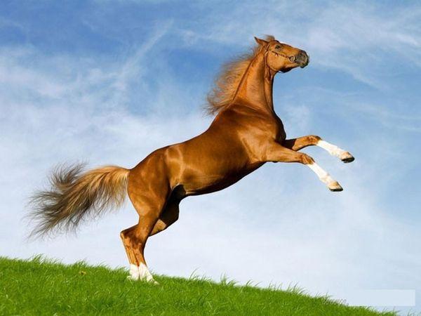 Год Лошади – седьмой по счету год по восточному календарю