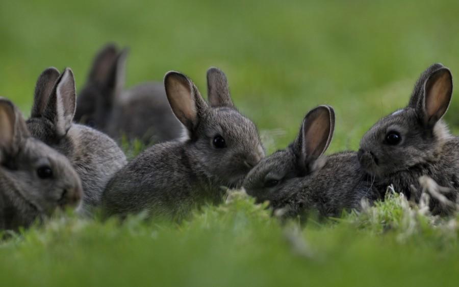 Зайчата в лесу – к необдуманным расходам