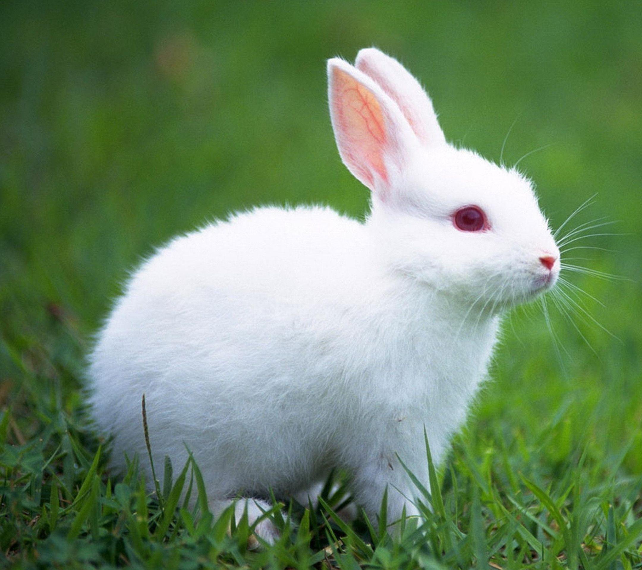 Толкование снов по Миллеру: белый кролик – символ супружеской верности
