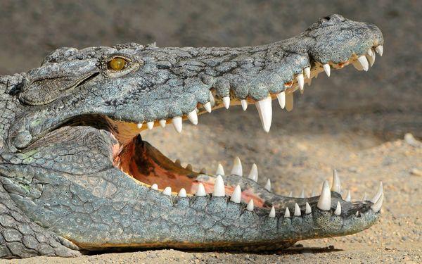 Гюстав Миллер считал, что рептилия – символ обиды и предательства
