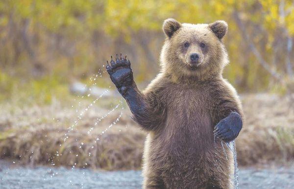 Для мужчины медведь во сне - олицетворение целеустремленности