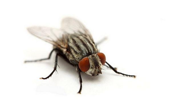 Молодой девушке мухи снятся к неожиданному несчастью