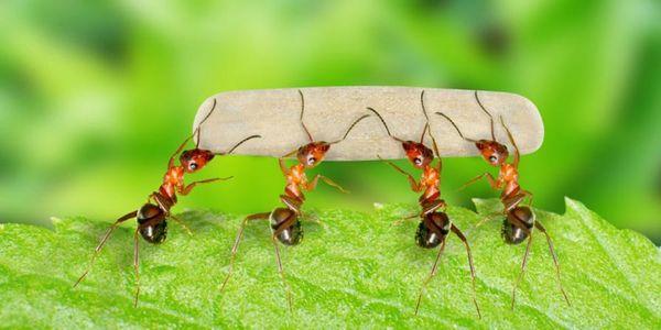 Трудолюбивые муравьи ассоциируются с кропотливой работой