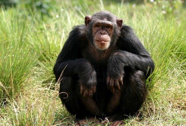 Сонник Дениз Линн отождествляет обезьян с беспечностью