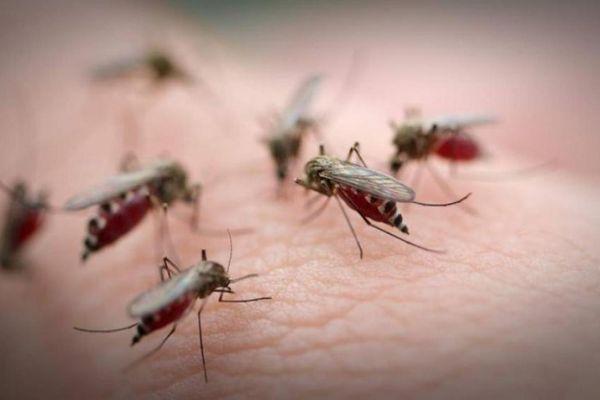 Комары предсказывают скорое наступление сложного жизненного периода