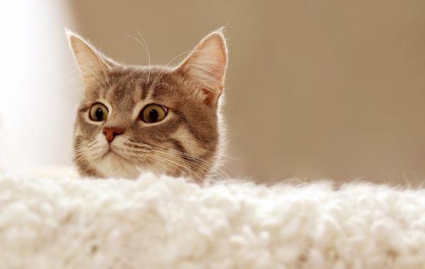 Мужчине коты снятся к неумению принимать собственное решение