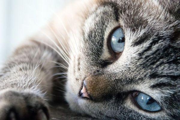 Размер кота означает масштаб неприятности