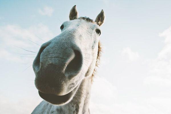К чему снится конь девушке