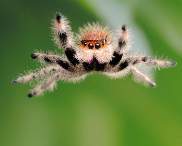 Огромный белый паук является вестником получения наследства