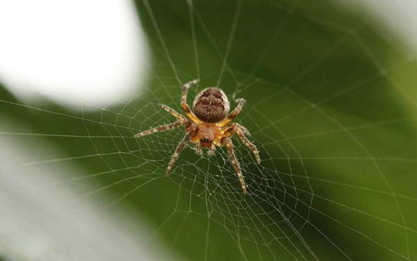 Паук, который плетет паутину, предвещает беременным рождение дочки