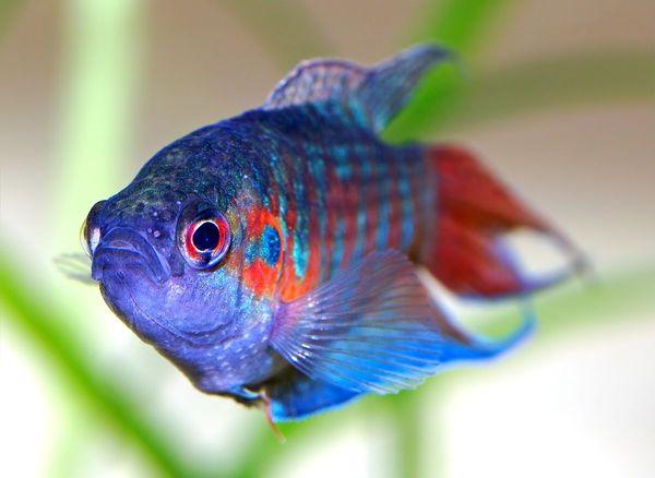 Блестящая рыбешка может напророчить уготованные судьбой щедрые подарки