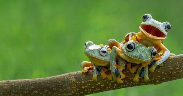 Если квакушки пребывают в болоте, наяву стоит готовиться к трудностям