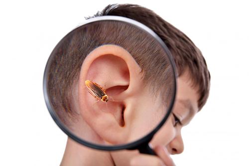Появившиеся в доме насекомые представляют опасность для человека