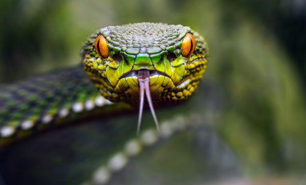 Если змея снятся мужчине — это свидетельство силы и притягательности